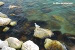 Cu polarizare: Dispar reflexiile de la suprafata apei. Apa isi recapata transparenta.