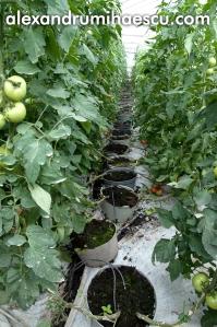 tomate crescute in turba