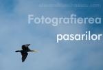 fotografiere pasari