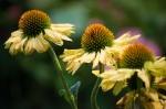fotografiere flori